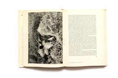 1949_De_eeuwige_wildernis_002