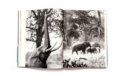 1958_Afrique_De_Equateur_004