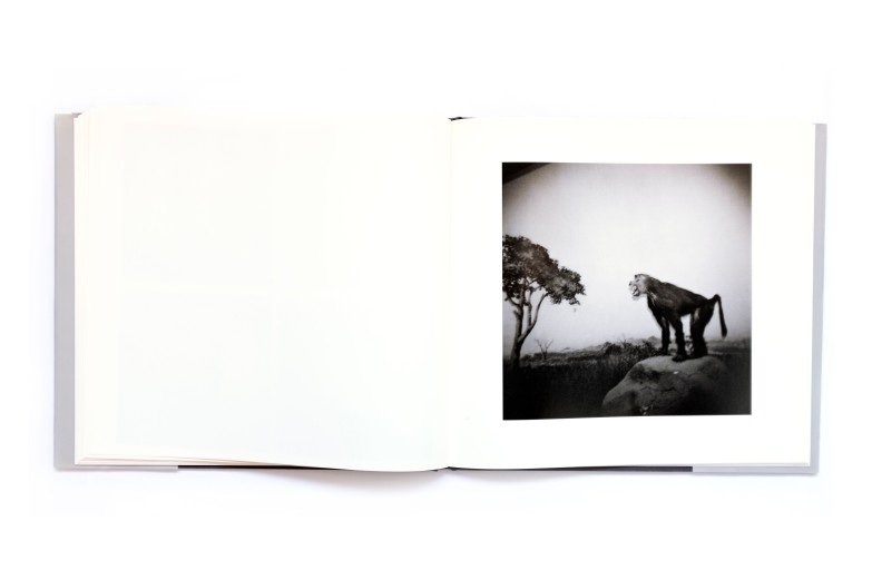 Title: Terreno Occupado Photographer(s): Jo Ractliffe Designer(s): Lunetta Barz Writer(s): Okwui Enwezor, David Goldblatt and Charles Skinner Publisher: Warren Siebrits, Johannesburg 2008 Pages: 100 Language: English ISBN: 978-0-620-42206-2 Dimensions: 28 x 29.5 cm Edition: 1000 Country: Angola