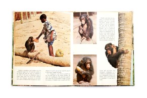 Title: Zambo et les animaux de la savane Photographer(s): Dominique Darbois Designer(s): J.D. Lortsch Writer(s): - Publisher: Éditions Nathan, Paris (?) 1973 Pages: 32 Language: French ISBN: 978–1-9998144-1-0 Dimensions: 21.5 x 26.5 cm Edition: Country: Togo
