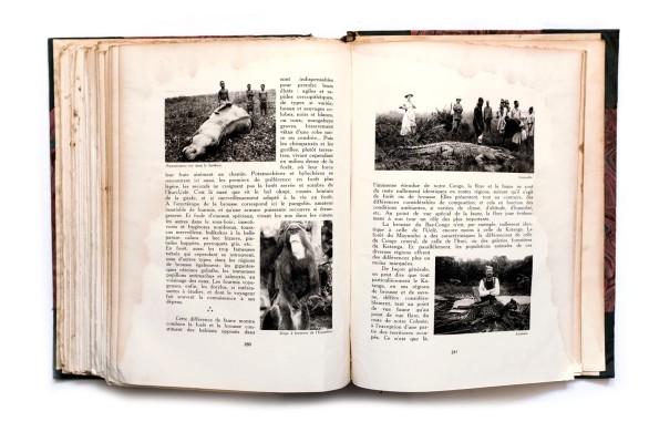 1929_Le_Miroir_du_Congo_Belge_Tome2_019