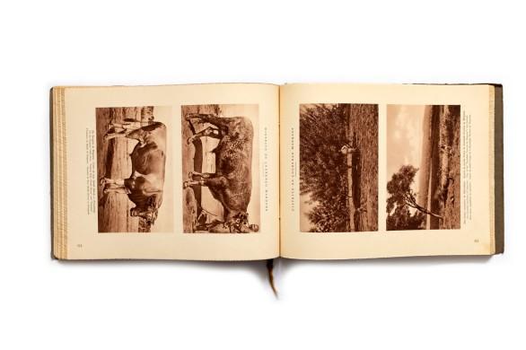 Title: Distrito de Lourenço Marques. Industrias, agricultura,aspéctos das circunscrições. etc. Photographer(s): Various photographers Writer(s): José dos Santos Rufino (ed.) Designer(s): - Publisher: Broschek & Co., Hamburg 1929 Pages: 114 Language:Portuguese, English and French ISBN: - Dimensions: 29.5 x 22 cm Edition: This volume is part 4 of a 10 volumes series Album Fotográficos e Descrítivos da Colónia de Moçambique Country:Mozambique